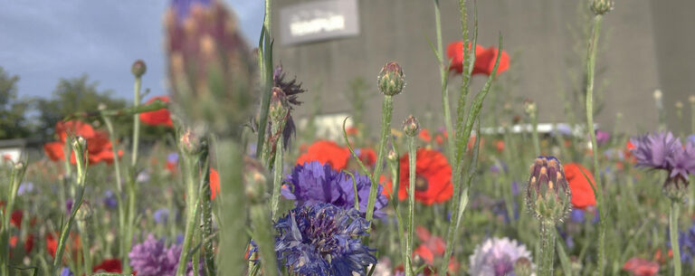 Des fleurs pour un bâtiment TEMPUR®